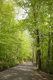 Country road. Empty dirt road thorugh woods - vertical format Royalty Free Stock Image
