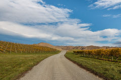 Country road across autumn vineyards. In New Zealand Stock Photos