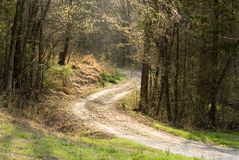 Country road in afternoon sun Stock Photo