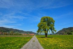 Country road through the agricultural land in summer Royalty Free Stock Image
