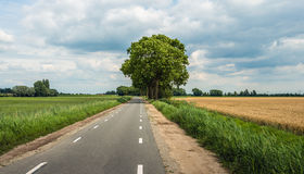 Country road in an agricultural landscape Royalty Free Stock Photography