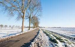 Country road in an agricultural winter landscape Royalty Free Stock Image