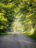 Country road alley lit by evening sun Royalty Free Stock Photos