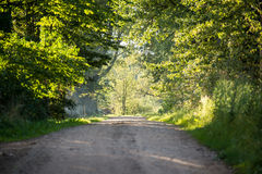 Country road alley lit by evening sun Royalty Free Stock Photo