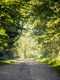 Country road alley lit by evening sun Stock Image