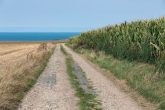 Country road along cornfield near coast of Normandie, France. Country road along corn field near coast of Normandy, France royalty free stock photography