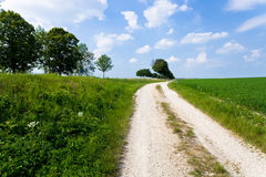 Country road along lucerne field Royalty Free Stock Photography