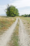Country road along the oak alley Royalty Free Stock Photos