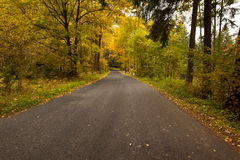 Country road along trees in the lush forest Royalty Free Stock Image