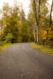 Country road along trees in the lush forest Royalty Free Stock Photography
