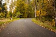 Country road along trees in the lush forest Stock Image