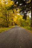 Country road along trees in the lush forest Stock Photography