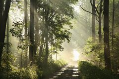 Free Country Road Among Oaks After Rainfall On A Foggy Spring Morning Rural Through The Woods Rays Of Sun Pass Branches Maple Trees Stock Photography - 161515672