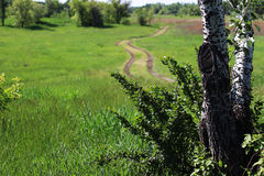 Country road. Amongst the green grass Royalty Free Stock Photography