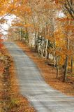 Country road ascending through colorful autumn woods royalty free stock photos