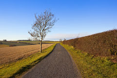 Country road and ash tree. A small rural road in arable yorkshire wolds landscapes with grass verges and a young ash tree under a blue sky in autumn royalty free stock photos