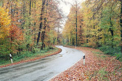 Country road in the autumn. The country road in the autumn Stock Images