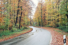 Country road in the autumn. The country road in the autumn Stock Image