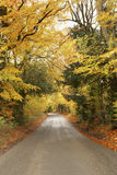 Country Road In Autumn Royalty Free Stock Image