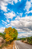 Country road in an autumn afternoon. With cloudy sky and trees Royalty Free Stock Photos