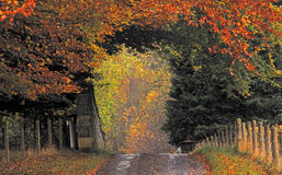 Country Road in Autumn Colors Stock Photo