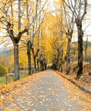 Country road in autumn Royalty Free Stock Photography