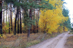 Country road in autumn forest Stock Photo