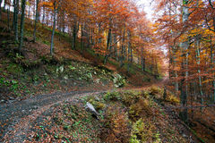 Country road through the autumn forest. Beautiful country road that runs along a forest in the mountains. It is autumn. Fallen leaves lie on the road Royalty Free Stock Photo