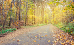 Country road in autumn forest, covert. Finland. Stock Image