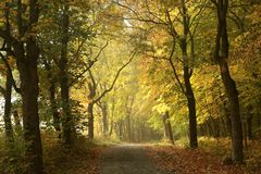 Rural road through an autumn forest stock images