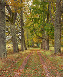 The country road in autumn Stock Image