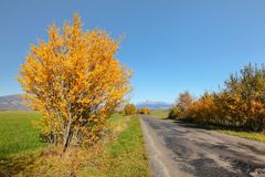 Country road in autumn, orange coloured trees on sides, mount Krivan Slovak symbol with clear sky in distance stock image