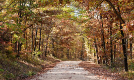 Country road through autumn trees Stock Image