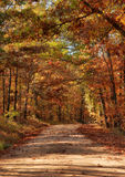 Country road through autumn trees. Country rural road through the forest in autumn or fall Royalty Free Stock Photo