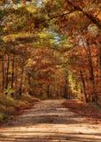 Country road through autumn trees Royalty Free Stock Photo