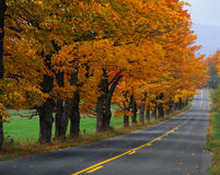 Country road with autumn trees Royalty Free Stock Photography