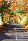 Country Road Through Autumn Woodland Stock Images