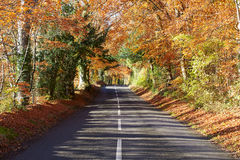 Country Road Through Autumn Woodland Stock Photos