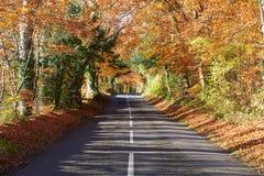 Country Road Through Autumn Woodland Stock Photos