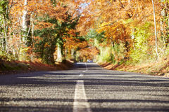 Country Road Through Autumn Woodland Royalty Free Stock Images