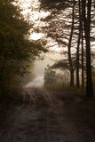 Country road through the autumnal forest in the morning. ukrainian forest and trees in fog and mist. Country road through the autumnal forest in the morning royalty free stock images
