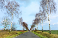 Country road with bare birch trees on both sides, wide fields an Stock Photos