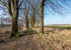 Country road between bare trees Royalty Free Stock Photo