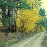 Country road in a beautiful autumn forest Stock Photos
