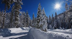 Country road through beautiful snowy winter forest Stock Image