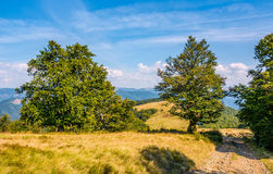 Road through beech forest on a hillside Royalty Free Stock Photo