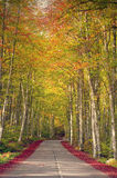 Country road in a beech tree forest, beutiful autumn colors Stock Image