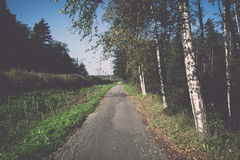 Country road with birch trees and old asphalt road Stock Image