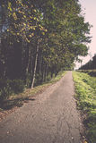 Country road with birch trees and old asphalt road Stock Photography