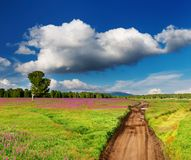 Country road in blossoming field Stock Photos